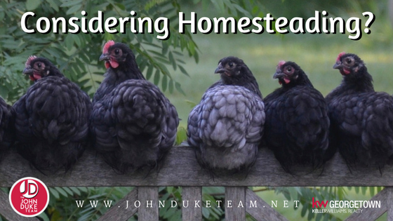 considering homesteading